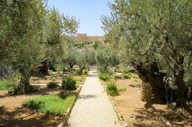 Bijbelse plaatsen - Gethsémané
